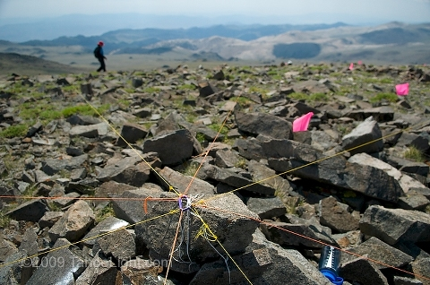 Survey plot lines at the first site at Barcroft peak, 13,040 feet in the White Mountains. The first US 5-year resurvey as part of the Global Observation Research Initiative in Alpine Environments or (GLORIA) climate change survey at the first US master-site in the White Mountains. The University of California's White Mountain Research Station played host to the week-long structured biological and ecological re-survery of several alpine peaks.