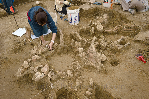 castroville mammoth excavation