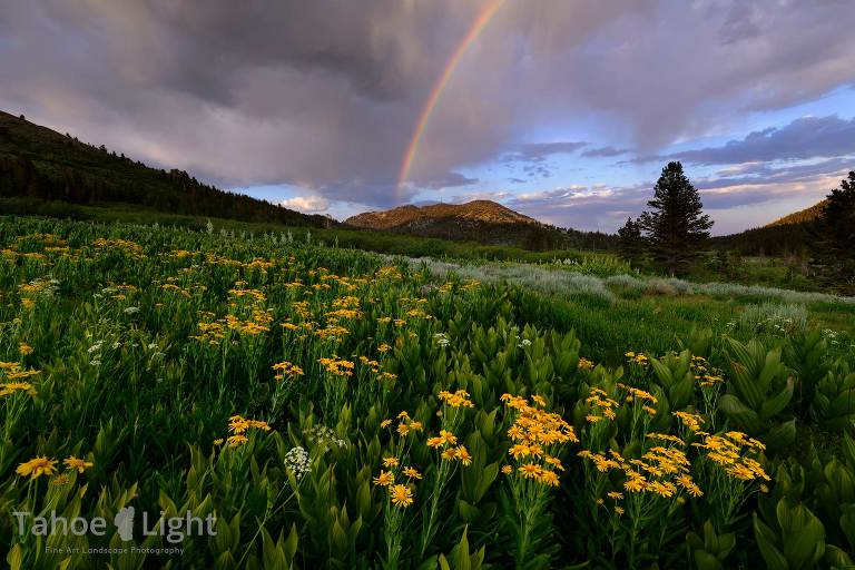 Landscape photo of alpine meadow with flowers and rainbow